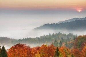 Погода на четвер, 24 жовтня: зранку все довкруж огорне туман, а вдень пануватиме осіннє тепло