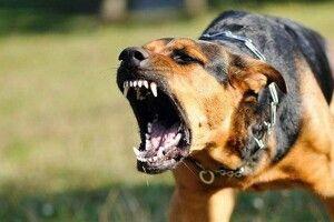 На Волині собака загриз 6 поросят