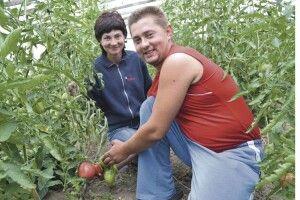 Сім'я з Волині вирощує 5тисяч кущів томатів, савойську капусту і петунії