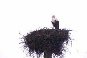 На Львівщині птах лишився зимувати в рідному гнізді