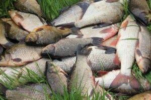 Поліція застерегла волинських рибалок від порушень під час нерестового періоду