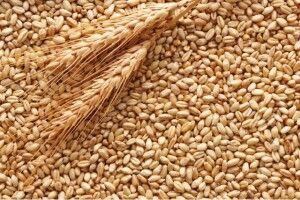 Цьогоріч Україна вже експортувала пшениці на 1,87 мільярда доларів