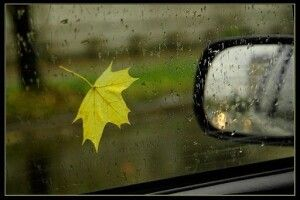 Погода на суботу, 18 вересня: холодатиме під поривчастий північно-західний вітер