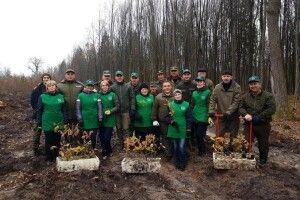 Цуманські лісівники зробили експерементальні посадки дуба