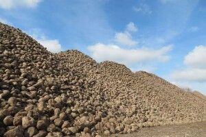 На Гнідавському цукровому заводі розпочали ревізію посівів цукрового буряка