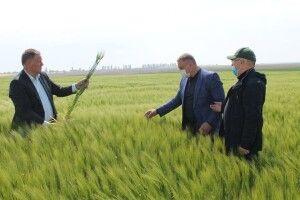 Озимина поблизу Луцька дає надію на гарний урожай (Фото)