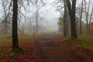 Погода на четвер, 14 листопада: якщо і цього дня не вдарить мороз – зима відкладається!