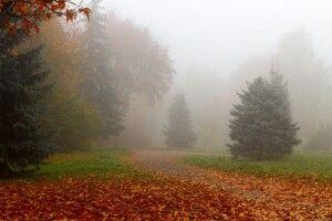 Погода на неділю, 20 жовтня: вранці туман, а вдень – хоч загоряй!