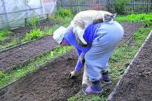 І грядку я сполола, й радикуліт разом зборола. Бо коли пенсія мала – надія на город і на кота!