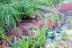 У Володимирі з'ясовують, чому у вуличному каналі текла червона вода