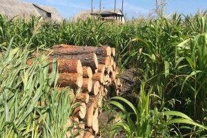 У волинянина на городі знайшли крадену деревину (Фото)