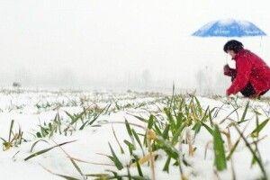 Вчені оцінили вплив морозів на майбутній урожай