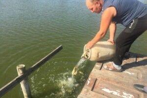 У річці Омелянівці побільшає коропів