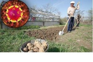 «Краще утриматися від городів, ніж заразитись». Відомі волиняни про коронавірус