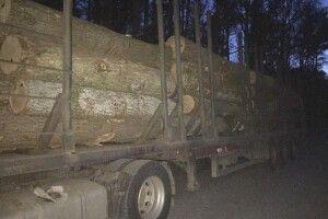 На Любомльщині затримали вантажівку, на якій перевозили незаконно зрізані дуби