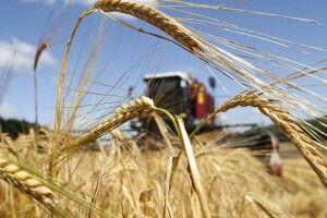 Волинські фіскали виявлятимуть факти нелегального працевлаштування в аграрній сфері