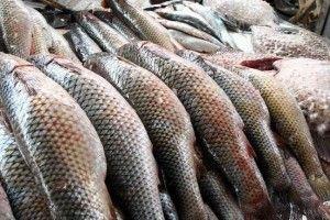 На Волині зменшилось виробництво риби