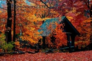 Погода на понеділок, 21 жовтня: осіння казка триватиме