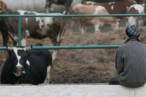 В Україні меншає молока