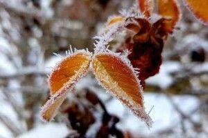 Дощі, сніги та морози: синоптики розповіли, якою буде погода у листопаді
