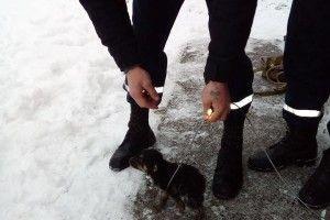 Бійцям ДСНС довелося рятувати цуцика, який впав у вигрібну яму (фото)