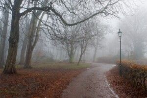 Погода на вівторок, 19 листопада: для цієї пори буде доволі тепло