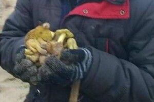 На Ратнівщині у грудні збирають гриби