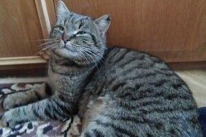 Лучанка знайшла «упітаного і воспітаного» кота (фото)