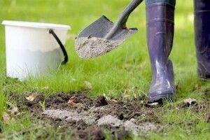 Поради волинянам: як підживити рослини