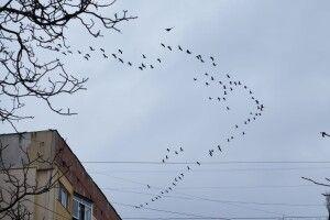 Ще й тієї зими не було, а в Україну вже повертаються журавлі (Фото)