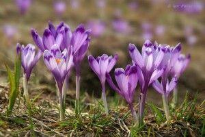 Погода на суботу, 6 березня: обіцяють північно-західний вітер, а він цього дня – до пізньої весни