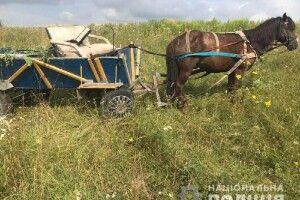Аби вивезти крадене злодій поцупив ще й коня (фото)