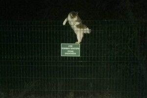 Порушник державного кордону перелазив через огорожу, щоб потрапити в Україну