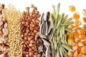 Українські виробники одержали право експортувати насіння зернових до країн Євросоюзу