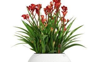 Догляд закімнатними рослинами