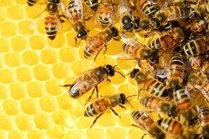 Україна збільшила експорт меду на 44 відсотки