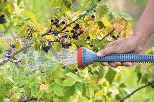 Як правильно поливати плодово-ягідні культури