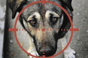 У селі на Горохівщині мисливець застрелив собаку