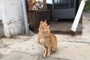 У Львові проведуть перепис вуличних котів