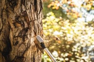 Масштабна спецоперація волинських правоохоронців: проведено 18 обшуків у ймовірних лісокрадів