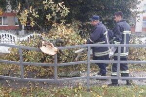 На Волині негода повалила дерева у кількох населених пунктах