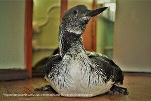 У Чорнобилі з'явився досі небачений там птах (Фото)