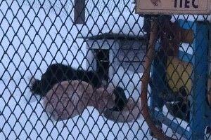 На Волині господарі вибрались з хати і залишили… кота з собакою на прив'язі