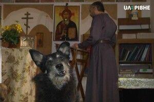 У Рівному єпископ однієї з громад тримає у храмі собак