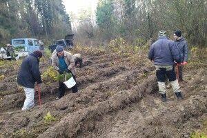 У Журавичах Ківерцівського району посіяли 300 кілограмів жолудів