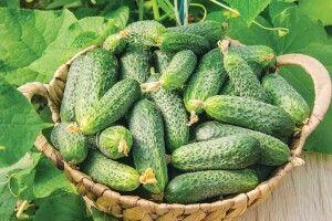 Салати, закуски і соління: рецепти найсмачніших огірків