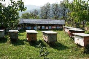 Бджолярі нарікають, що таких кепських справ на пасіках не було впродовж 40 років