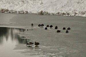 Небайдужі просять владу порятувати на Теремнівських ставках птахів