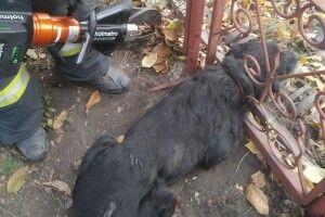 Бійцям ДСНС довелося рятувати Барбоса, який запхнув свого носа в халепу (фото)