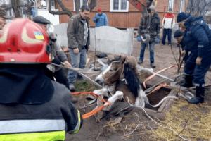 Рятувальники дивом дістали коня із глибокої ями